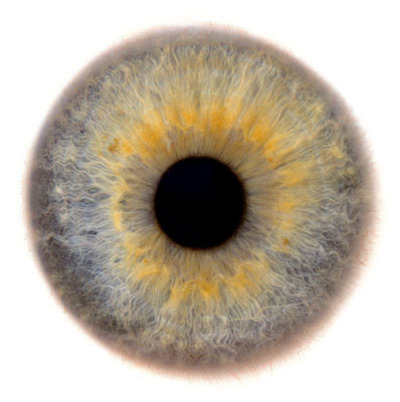 Eye_scapes_19