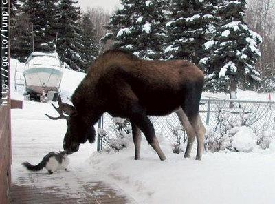 Cat_moose