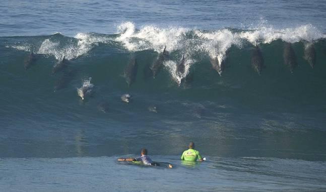 dolphin_surfer_school