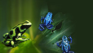 Frogs_image